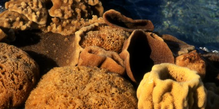 DODECANESE-KALYMNOS©CLAIRY MOUSTAFELLOUPothia ,sea sponges