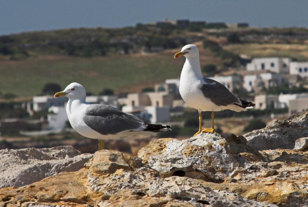 Fauna of the Aegean