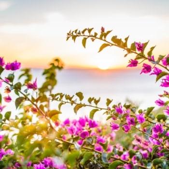 Aegean flora